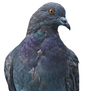 Ochrana proti holubům