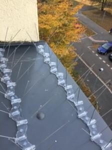Hroty proti holubům instalovány na parapet okna