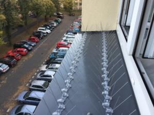 Hroty proti holubům instalované na parapetu okna