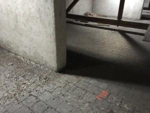 Půda základní školy znečištěná holubím trusem